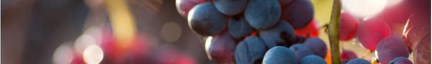 Vitajuwel et le vin carafe phiolino